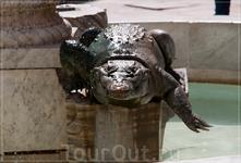 Крокодил - символ Нима