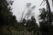 Вершина горы притягивала к себе облака и чем выше мы поднимались, тем туманнее становилось.