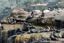 В 1990-е годы этот участок берега облюбовали котики. В 1997 году власти заявили, что пляж небезопасен для купания из-за высокого содержания бактерий, которые ...