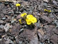 Это апрель 2007. Мать-и-мачеха цветет, а мы катаемся.