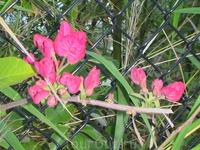 Вновь цветы