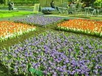 поля цветов