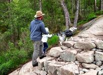 Идут с детьми, собаками, по ступенькам (изредка) или камням, или ручьям, или по кочкам