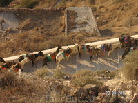 Ия; ослики - живой символ Санторини