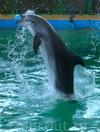 Фотография Евпаторийский дельфинарий