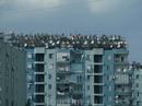 Анталья. Водонагреватели и антенны на крыше.