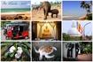 Слева-направо и сверху-вниз: лазурный океан в Хиккадуве;  питомник слонов; пляж с пальмами в Ваддуве;  яркий тук-тук - незаменимое средство для поездки ...