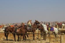 Пирамиды Гизы, лошадки целуются, мило!
