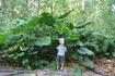 Одна из достопримечательностей Ла Дига- заповедник мухоловок. Небольшой лесной массив где обитает редкая птичка - райская мухоловка. В самом заповеднике ...