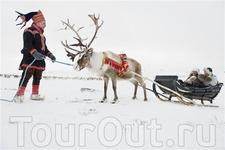 Катание туристов на оленях. Губерния Финнмарк, Северная Норвегия.  Foto: Terje Rakke/Nordic Life/Innovation Norway