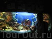 океанариум в Сочинском парке Ривьера