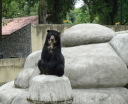 Спросонья наблюдает за посетителями зоопарка и позирует...
