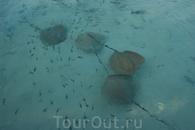 Это  гигантские скаты воюют с рыбой за еду...вид со служебного пирса