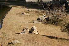 Зоопарк\ огромные территории для маленьких прайдов львов