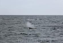 Погодка нас не радовала, то ветер сильный дул, то дождь накрапывал... да и море немного штормило, а мы волновались по поводу китов, увидим ли их???  Ну ...