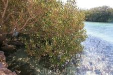 на этом фото видны над водой корни мангровых деревьев