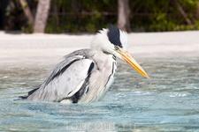 Птичке  тоже было жарко, поэтому она прилетала купаться в бассейн вместе с отдыхающими:-)