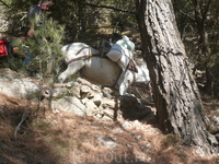 """По пути обгоняют пару навьюченных осликов.Вероятно,это """"силовая тяга""""работников национального парка.Больше я их не видела."""