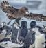 В колонии пингвинов