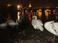 хороши птички на фоне Карлова моста