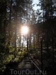 в лесу по дороге к Беломорским Петроглифам
