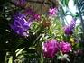 Орхидеи всех цветов радуги