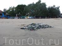 Побережье Джимбарана такое чистое, что мусор там сам сгребается в кучи.