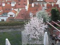 мне понравилась эта яблоня, она растет на крыше дома. На этой же крыше расположено небольшое кафе. Это все рядом с Пражским градом.