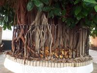 Никогда не видел таких деревьев, но в Гранаде они поразили меня