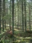 прогулки по долинам