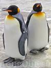 Фотография Эдинбургский зоопарк