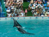 Адлерский дельфинарий