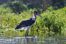 Найваша является домом почти 400 видов птиц, здесь можно встретить розовых фламинго, африканских орлов-рыболов, бакланов и многих других.
