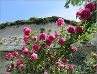 Важнейшая составляющая интерьера городка - розы...