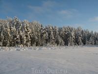Здесь тоже снежное безмолвие. Вы умеете так молчать, как может молчать природа?