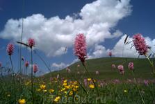 Цветы в горах