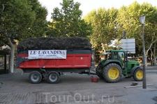 Трактор груженый Лавандой