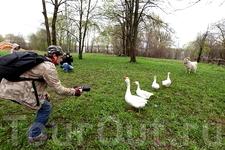 Но здесь роли поменялись. Познакомиться с нами хотели именно гуси.