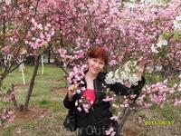 Цветение сакуры, яблони или чего-то ещё...
