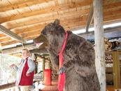 Чучело медведя стоит у магазина и крутит головой.
