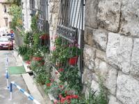 Иногда места в квартире не хватает и цветы выносят прямо на улицу.
