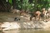 Бали/ Сафари парк. Животные содержатся в естественных условиях. По парку проходит экскурсия на автобусе с англоговорящим гидом.