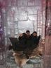 Ледяной отель, внутри всё сделано изо льда