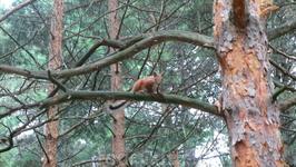 Белка на дереве.