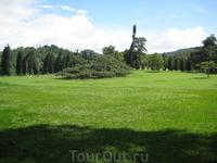 Ficus benjamina - Королевский ботанический сад.
