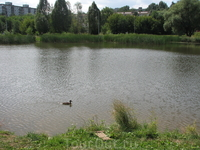 Воронежские озера в центре спального района Самары с утятами