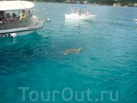 Встреча черепашки каретта-каретта в море!