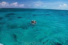 кормление и наблюдение за рыбами, карибские воды