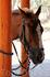 Лошадка в тени пряталась от солнца... Зоопарк Фригиа - Friguia Park - между Сусом и Хаммаметом