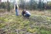 Попытка стащить карельский мох на Ленинградскую землю. Весной узнАем, прижился ли на даче.